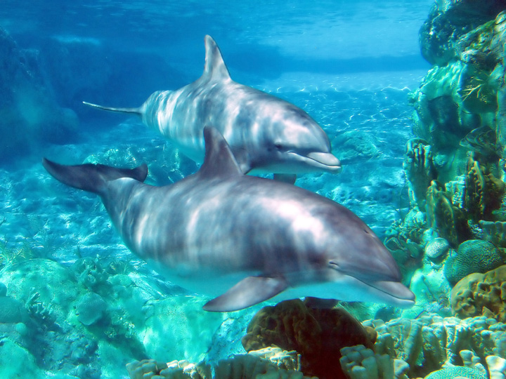 Swim with the Dolphins at Dolphin Cove Negril